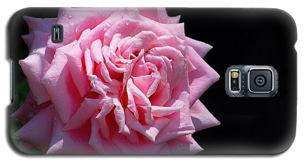 Rose Galaxy S5 Case by Ludwig Keck
