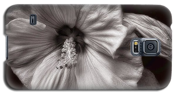 Rose Mallow Bloom Galaxy S5 Case by Louise Kumpf