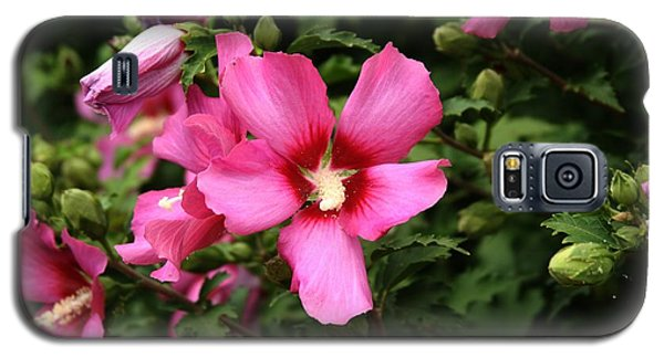 Rose Of Sharon Hibiscus 2 Galaxy S5 Case by Margaret Newcomb