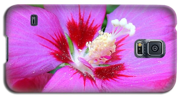 Rose Of Sharon Hibiscus Galaxy S5 Case by Patti Whitten