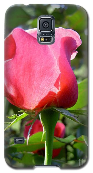 Rose Portland  Galaxy S5 Case by Marlene Rose Besso