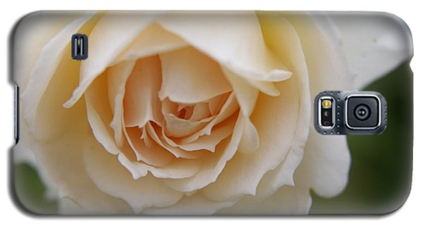 Galaxy S5 Case featuring the photograph Rose... Pure And Simple  by Lynn England