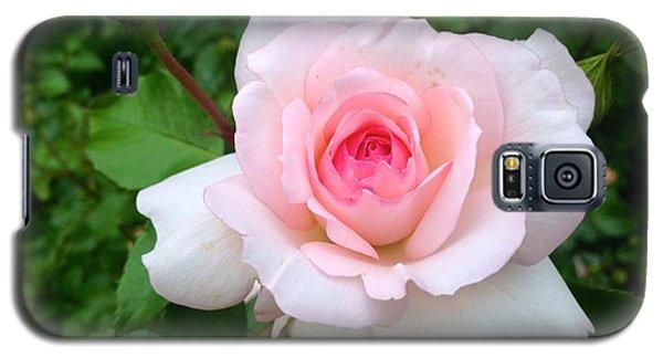 Rose -summer Pink Galaxy S5 Case