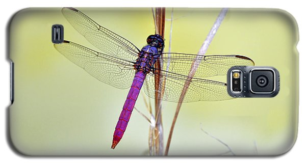 Roseate Skimmer Dragonfly Galaxy S5 Case