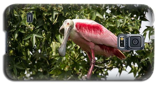 Roseate Spoonbill  What Are You Looking At 2 Galaxy S5 Case