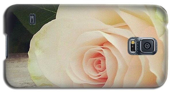 Decorative Galaxy S5 Case - Rosebud On Wood by Jacqueline Schreiber