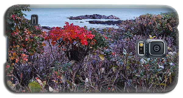 Galaxy S5 Case featuring the photograph Rosehip by Mim White
