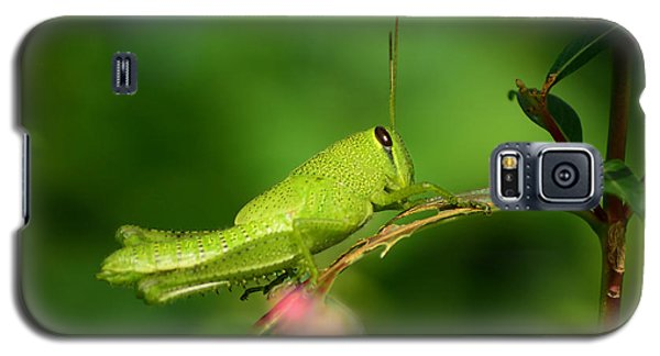 Galaxy S5 Case featuring the photograph Rosemary Grasshopper - Instar Nymph by Kathy Baccari