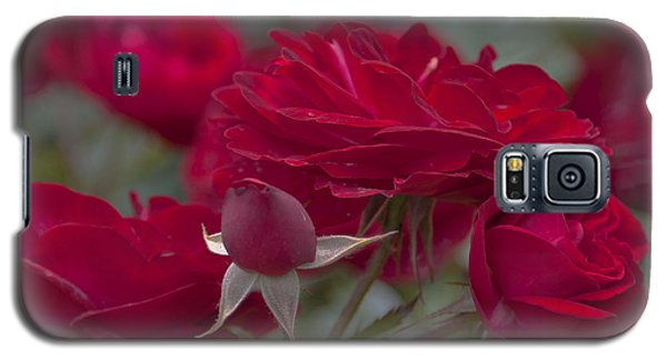 Roses And Roses Galaxy S5 Case