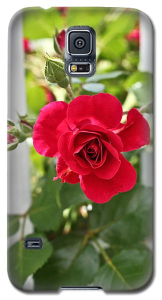 Galaxy S5 Case featuring the photograph Roses Are Red by Joann Copeland-Paul