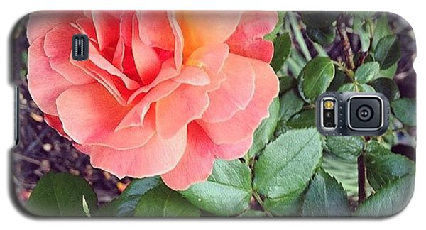 Roses Are Salmon...wait, What!? Galaxy S5 Case by Amber Flowers