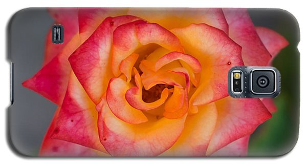 Roses From My Garden Galaxy S5 Case
