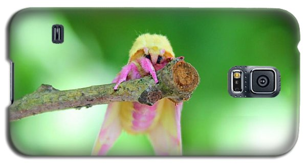 Rosy Maple  Galaxy S5 Case