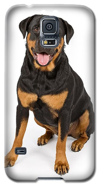 Rottweiler Dog Isolated On White Galaxy S5 Case