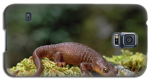 Rough-skinned Newt Oregon Galaxy S5 Case by Gerry Ellis