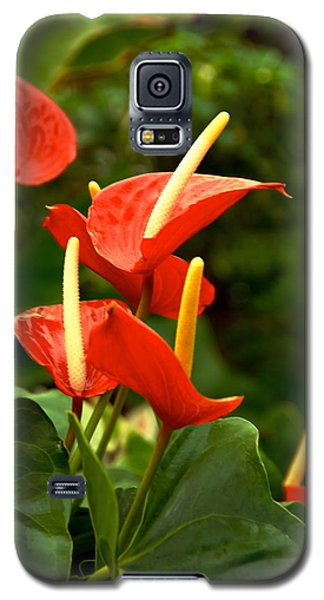 Rousing Reds Galaxy S5 Case
