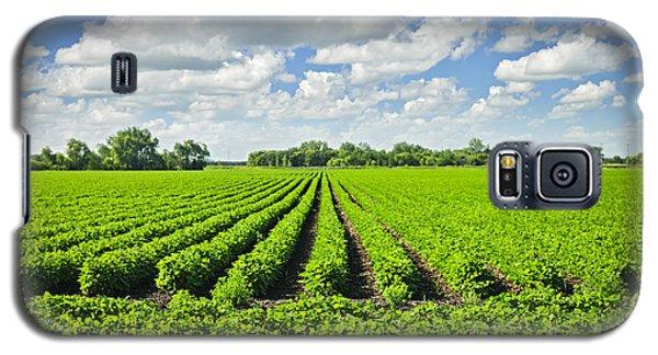 Rows Of Soy Plants In Field Galaxy S5 Case