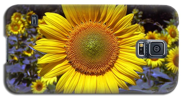 Galaxy S5 Case featuring the photograph Roxanna Sunflower by Bill Swartwout