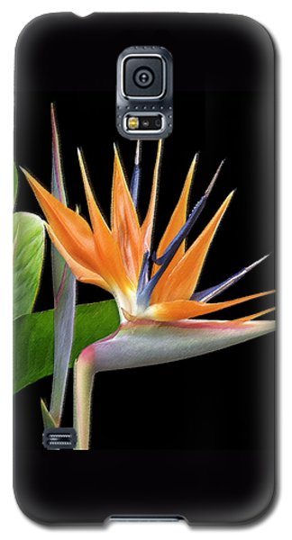 Royal Beauty I - Bird Of Paradise Galaxy S5 Case