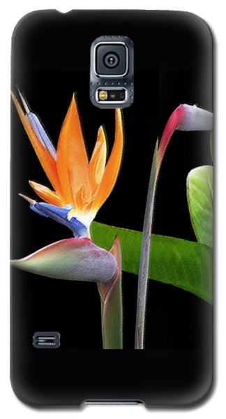Royal Beauty II - Bird Of Paradise Galaxy S5 Case by Ben and Raisa Gertsberg