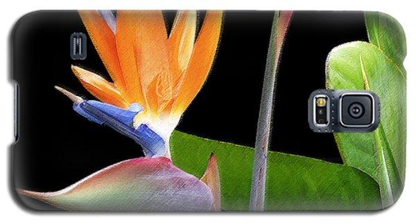 Royal Beauty II - Bird Of Paradise Galaxy S5 Case