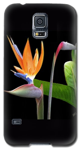 Royal Beauty II - Bird Of Paradise Galaxy S5 Case