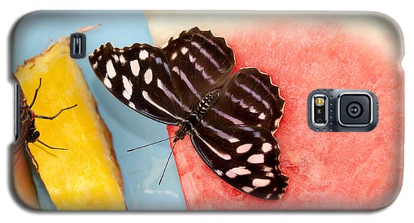 Galaxy S5 Case featuring the photograph Royal Blue Butterfly by Eva Kaufman
