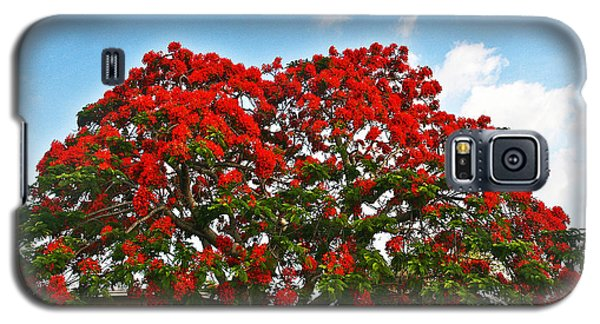 Galaxy S5 Case featuring the photograph Royal Panciana Tree by Joan McArthur