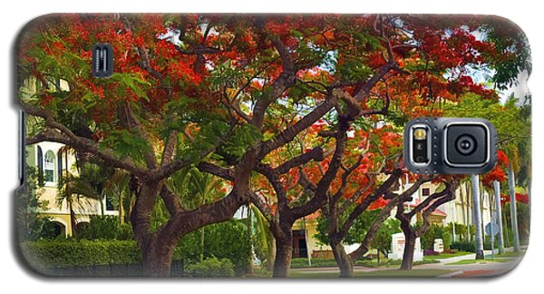 Royal Poinciana Trees Blooming In South Florida Galaxy S5 Case