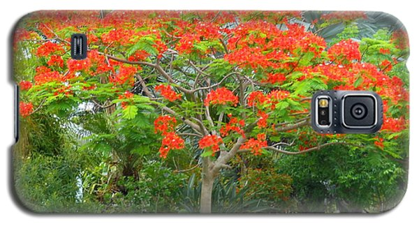 Galaxy S5 Case featuring the photograph Royal Poinciana by Kay Gilley