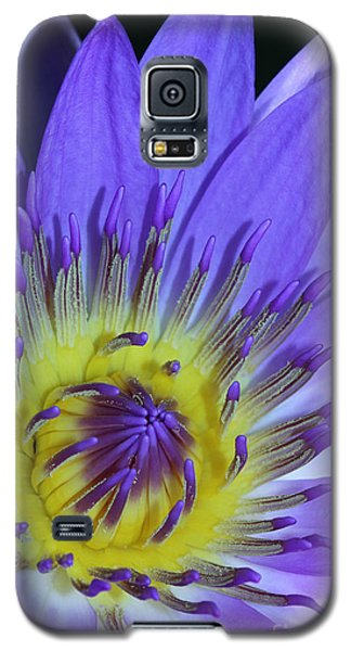 Royal Purple Water Lily #11 Galaxy S5 Case