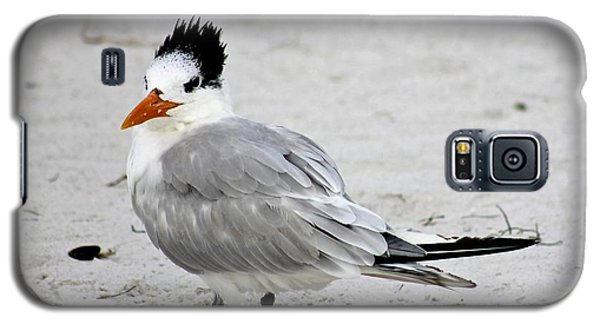 Galaxy S5 Case featuring the photograph Royal Tern - Adult Nonbreeding by Jeanne Kay Juhos