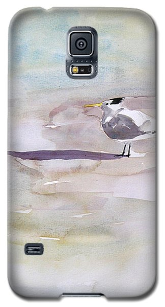 Royal Tern  Galaxy S5 Case