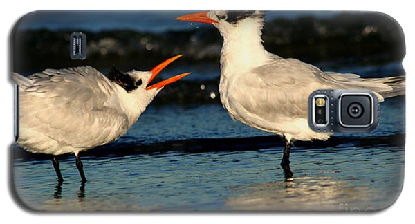 Royal Tern Courtship Dance Galaxy S5 Case