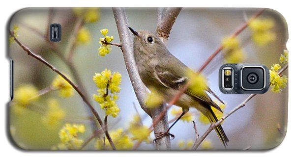 Galaxy S5 Case featuring the photograph Ruby-crowned Kinglet by Kerri Farley