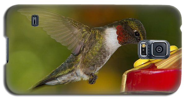 Ruby-throat Hummer Sipping Galaxy S5 Case
