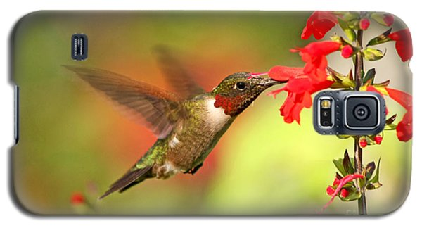 Ruby Throat Hummingbird Photo Galaxy S5 Case by Luana K Perez
