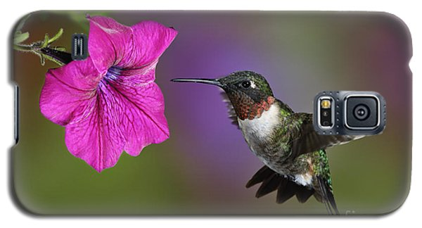 Ruby-throated Hummingbird - D004190 Galaxy S5 Case