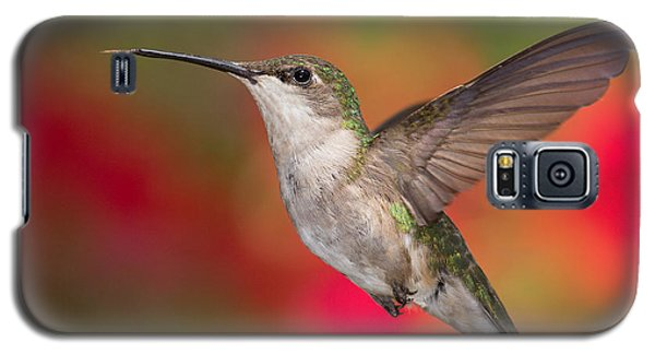 Ruby Throated Hummingbird Galaxy S5 Case