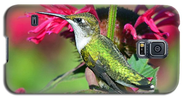 Galaxy S5 Case featuring the photograph Ruby Throated Hummingbird Female by Rodney Campbell