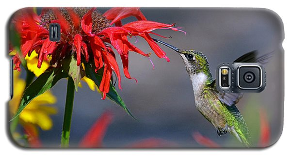 Ruby Throated Hummingbird In A Flower Garden Galaxy S5 Case by Rodney Campbell
