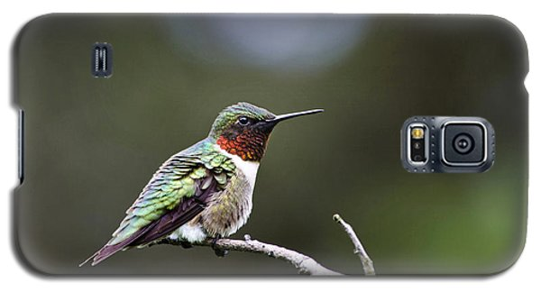 Ruby Throated Hummingbird Spotlight Galaxy S5 Case