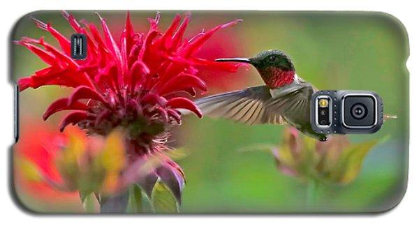 Ruby Throated Hummingbird With Beebalm Galaxy S5 Case
