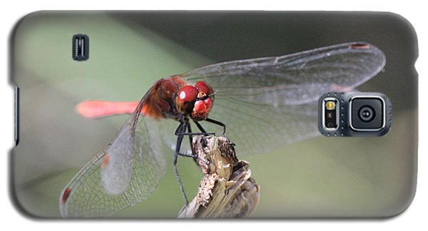 Galaxy S5 Case featuring the photograph Ruddy Darter Dragonfly - Sympetrum Sanguineum by Jivko Nakev