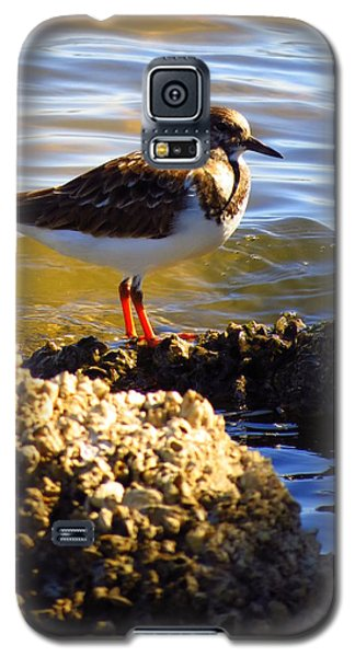 Galaxy S5 Case featuring the photograph Ruddy Turnstone  by Phyllis Beiser