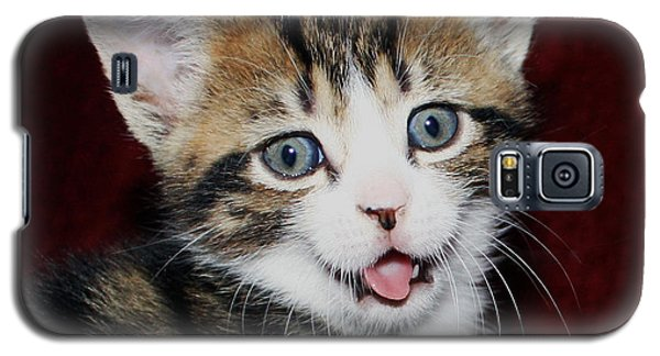 Galaxy S5 Case featuring the photograph Rude Kitten by Terri Waters