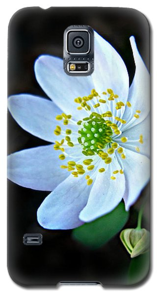 Galaxy S5 Case featuring the photograph Rue Anemone by William Tanneberger