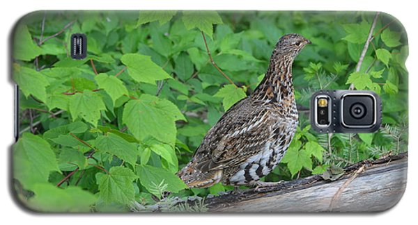 Ruffed Grouse Galaxy S5 Case by James Petersen