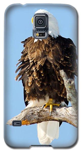 Ruffled Eagle Galaxy S5 Case