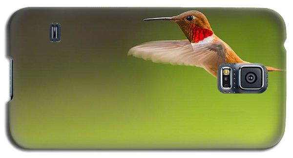 Rufous Hummingbird Male Galaxy S5 Case